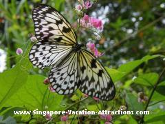 Sentosa Island Butterfly Park and Insect Kingdom