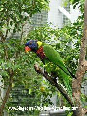 Lory picture in Singapore's Jurong Bird Park Lory Loft