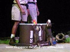Not to miss when you visit Night Safari Singapore, Creatures of the Night Show