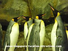 Penguin feeding session at Penguin Expedition in Jurong Bird Park