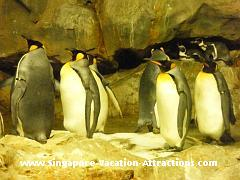 Penguin feeding picture at Jurong Bird Park Punguin Expedition