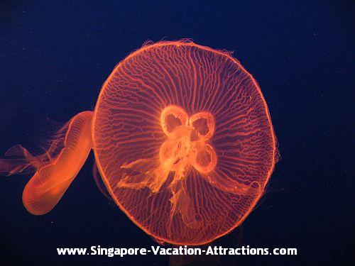 What to see at Underwater World: Jellyfish, Seahorses, Seadragons etc