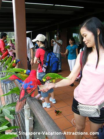 Lory Feeding Picture