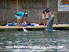 Meet-the-Dolphins Show at Sentosa Island